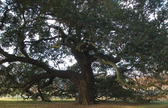 1280px-hampton_university_-_emancipation_oak